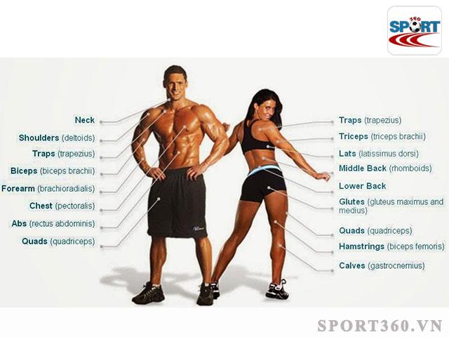 Tham khảo các nhóm cơ nên kết hợp luyện tập với nhau