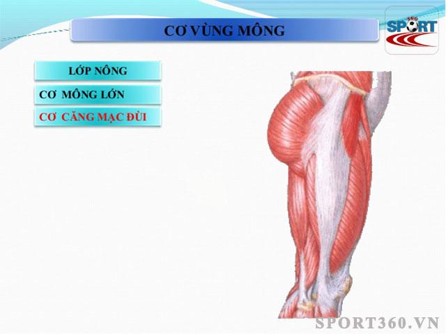 Cấu tạo vùng mông và chân - sporrt360.vn