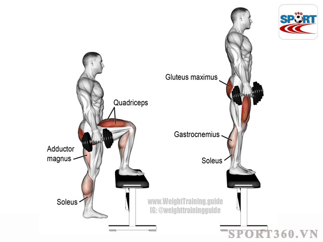Bài tập nâng cẳng chân giúp bạn có được cơ chân khỏe mạnh
